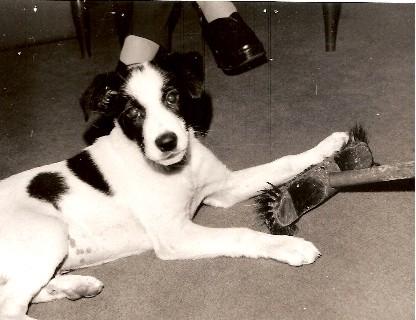 Dogo di Barbara