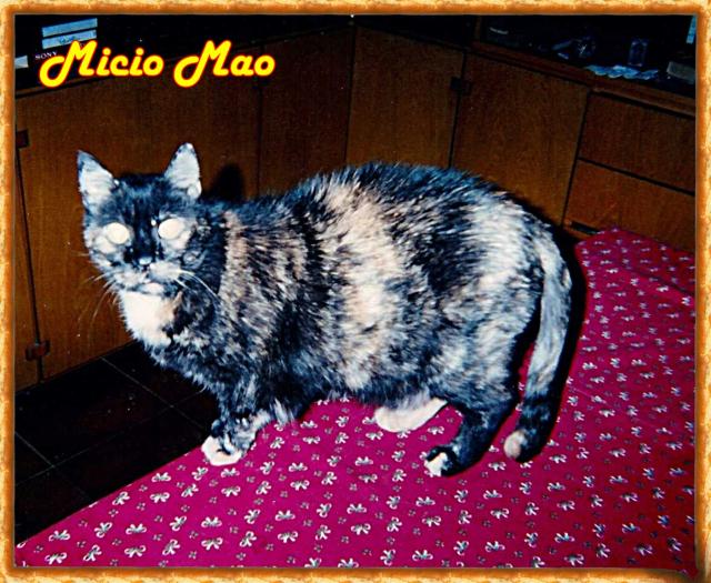 Micio Mao