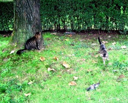 Percy e Attila a caccia
