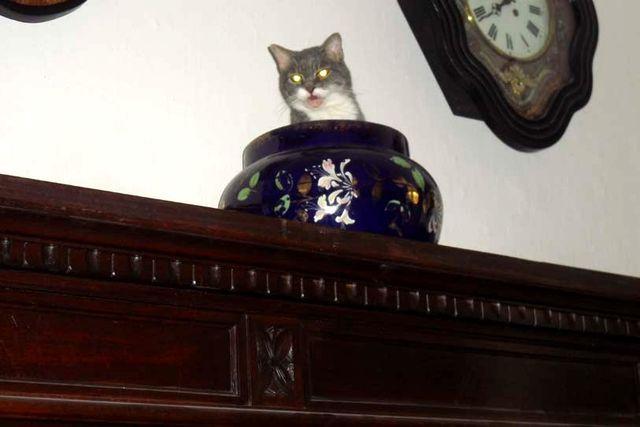 Cleo, la piccola vedetta lombarda