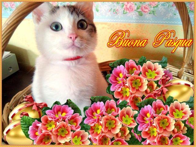 Lucelilla augura Buona Pasqua