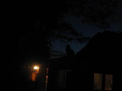 Attila di notte
