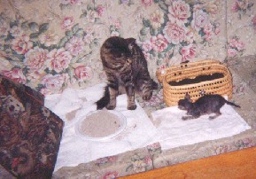 Attila e e Percy 3