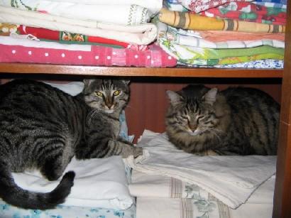 Attila e Percy nell'armadio