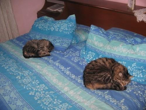 Percy e Attila:sembra di vederci doppio!