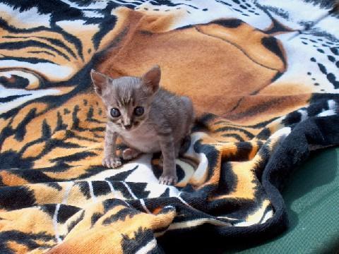 Percy da piccolo