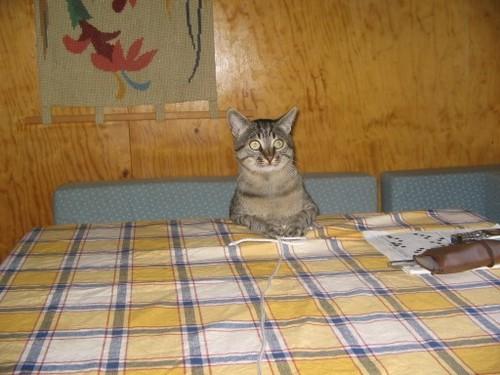 Percy:pronto in tavola