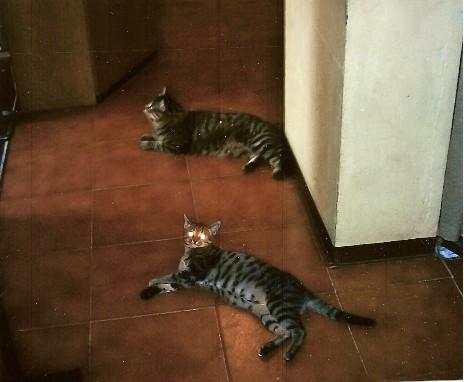 Percy ed  Attila:come allo specchio!