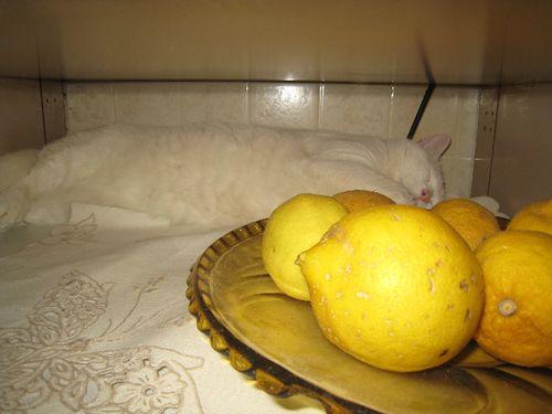 Pallina e limoni