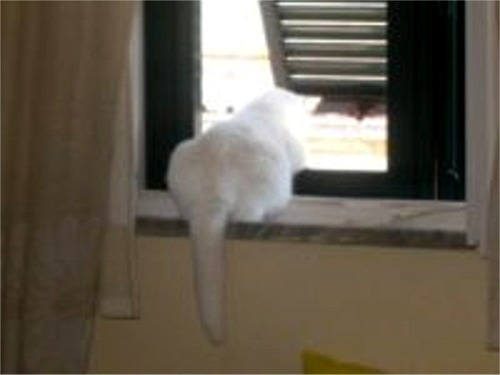 Pallina alla finestra