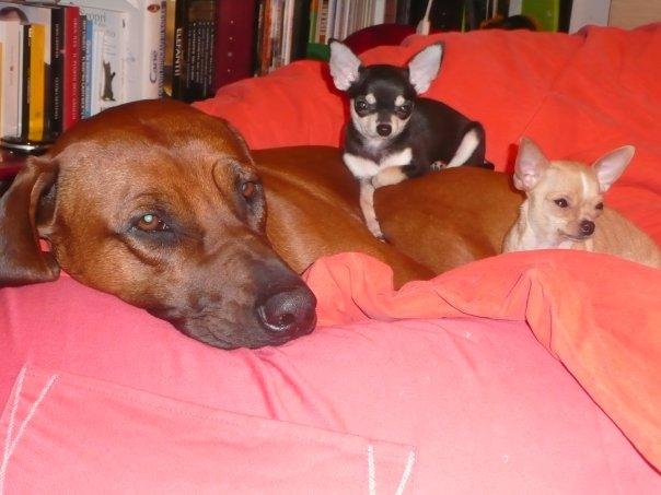 Cecio e i suoi...topi
