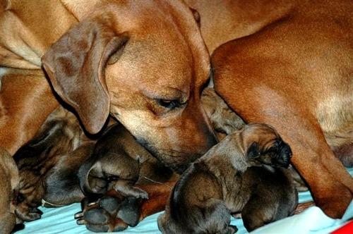 Shaasa è diventata mamma