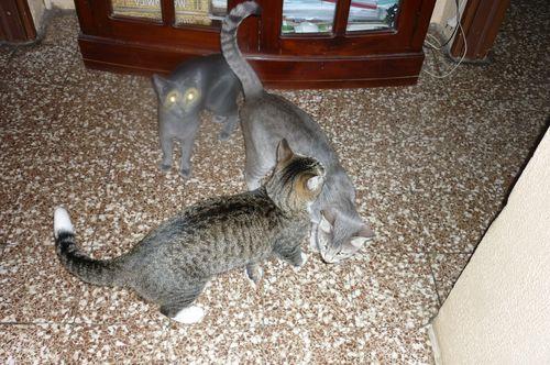 Blu Tata e Lea