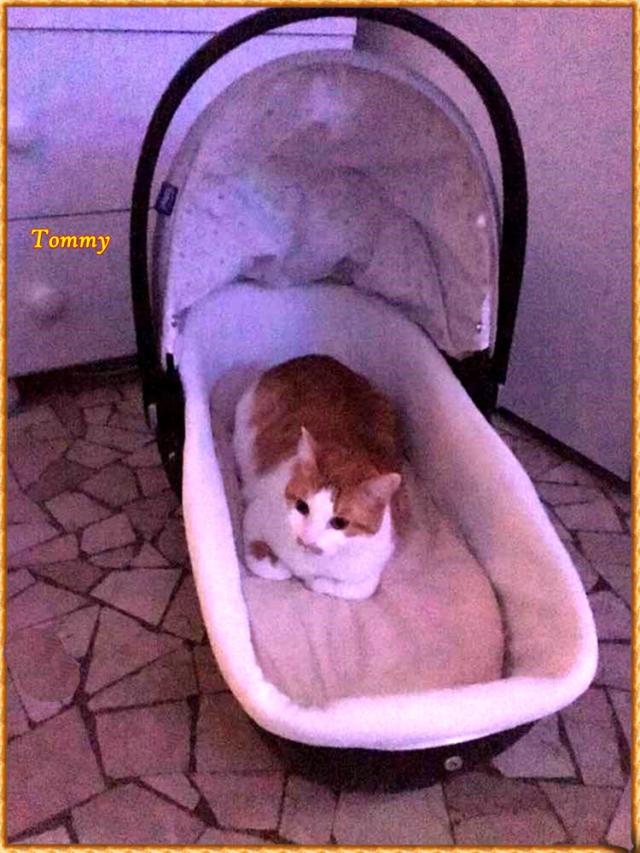 Tommy di Vicky