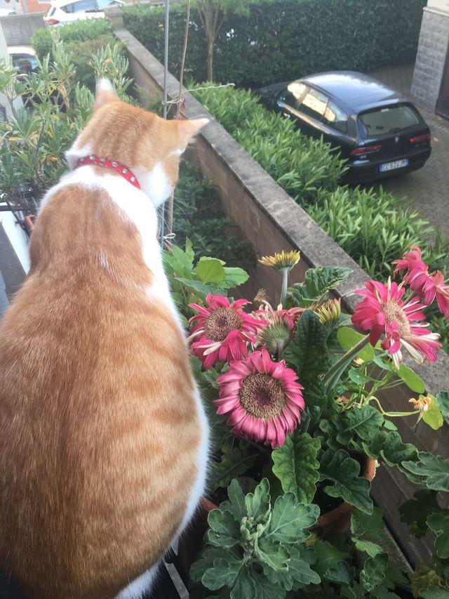 Tommy fior tra i fiori