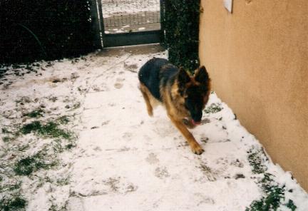 Zara nella neve
